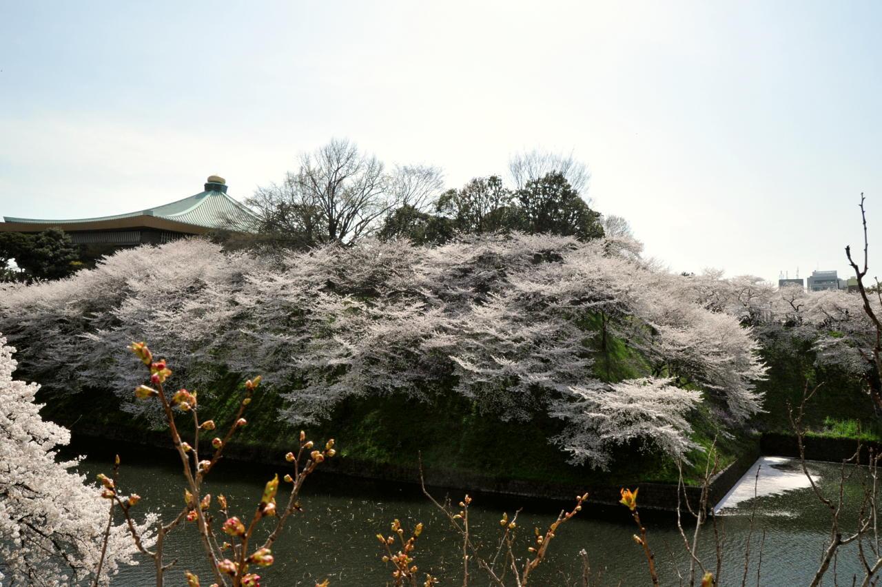CherryBlossom01