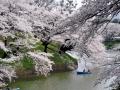 CherryBlossom05