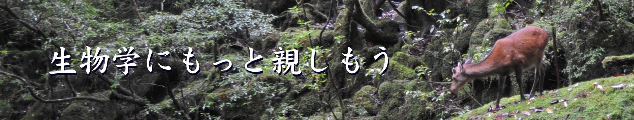 和田勝のページ